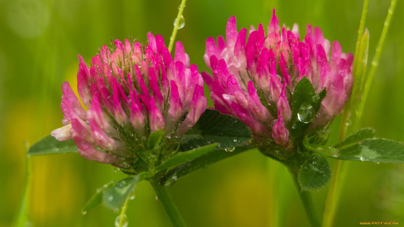 Узнать полевой цветок по фото
