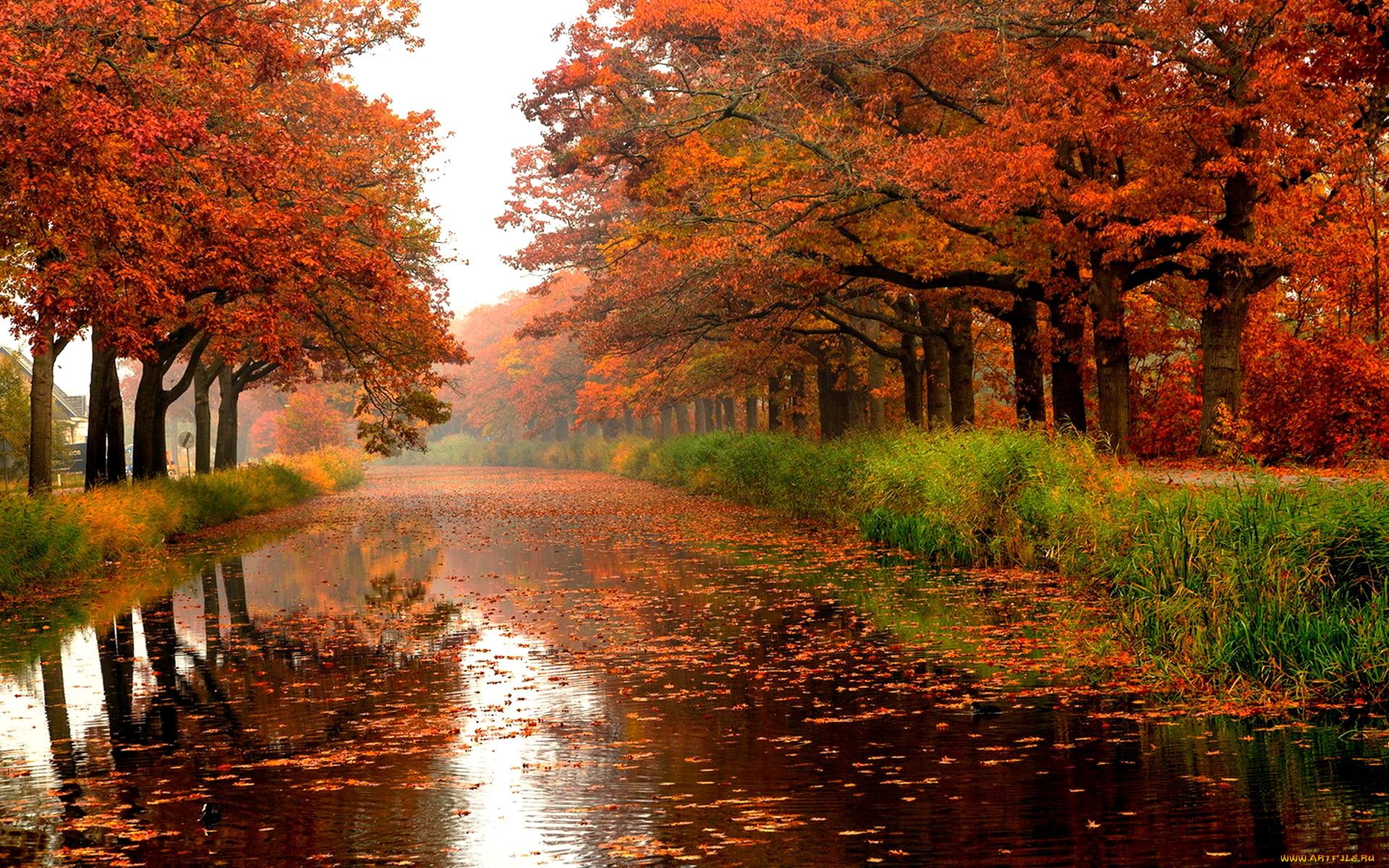 обои на рабочий стол осень листья дождь 15950
