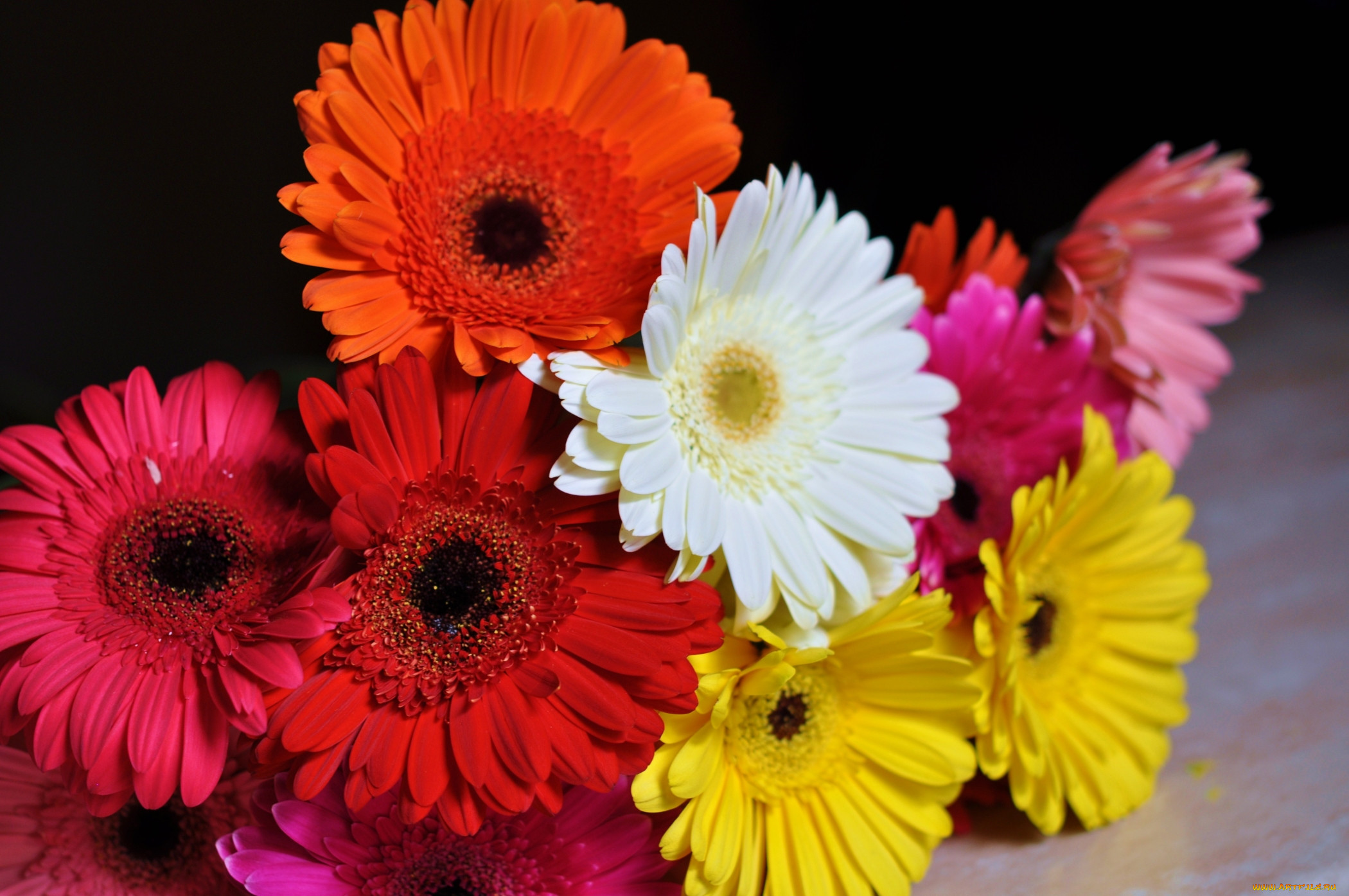 Фото цветов букетов герберы