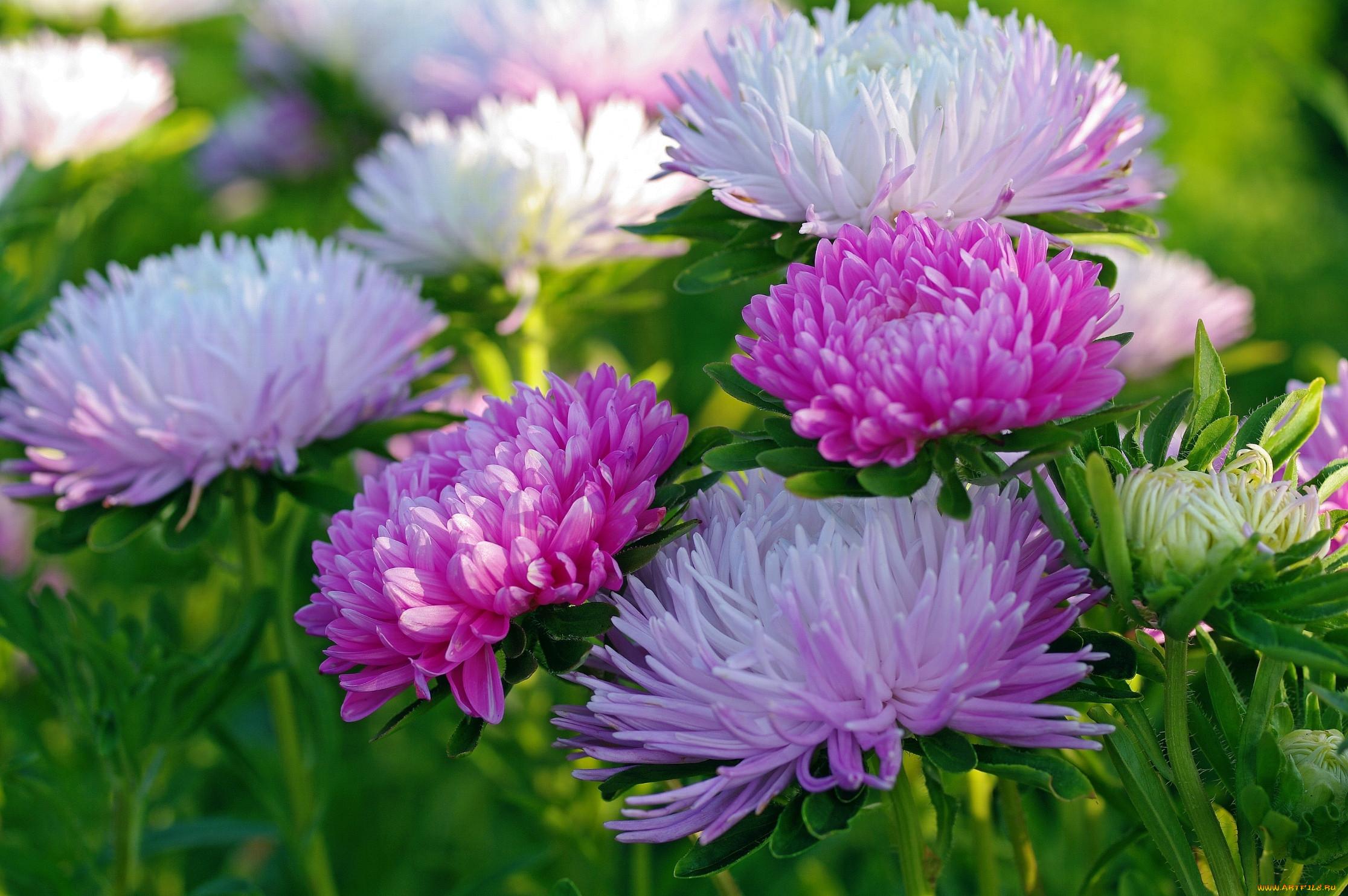 обои на рабочий стол осень цветы 5378