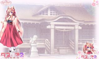 tayutama 2, аниме, tayutama,  kiss on my deity, взгляд, девушка, фон
