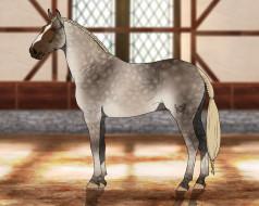 взгляд, фон, лошадь