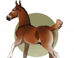 фон, лошадка
