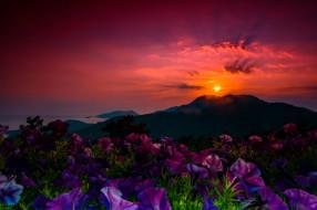 обои для рабочего стола 2048x1365 природа, восходы, закаты, закат, цветы, лучи, горы