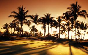 �������, �������, golf, palms, sunrise, club