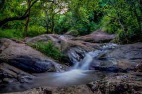 природа, реки, озера, река, лес