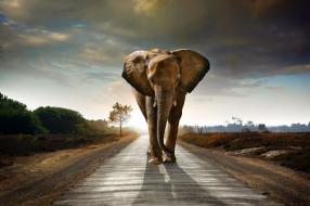 elefant, млекопитающее, саванна, Слон, дорога, идёт