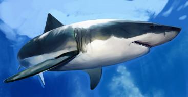 рисованное, животные, акула, shark, рыба, хищник, вода, море