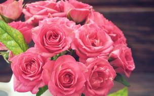 цветы, розы, розовые