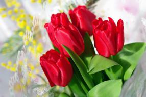 цветы, тюльпаны, красный, бутоны