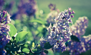 обои для рабочего стола 2560x1572 цветы, сирень, цветение, весна, свет, природа, боке