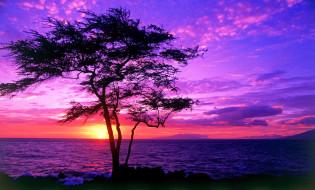 природа, восходы, закаты, небо, облака, закат, море, дерево, берег