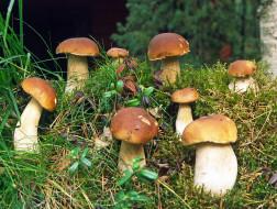 природа, грибы, грибочки