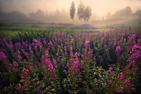 природа, луга, цветы, трава