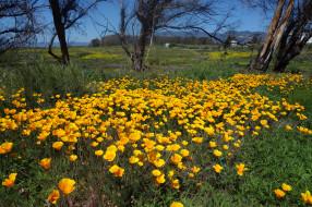 природа, луга, трава, цветы