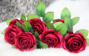 цветы, розы, фон