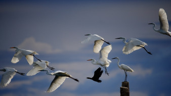 природа, небо, птицы