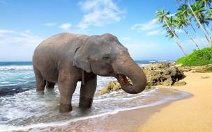 palms, пляж, пальмы, море, слон, берег, песок, sand, tropical, sea, beach, elephant