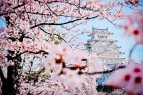 города, замки Японии, замок, Япония, весна, сакура, дворец, пагода