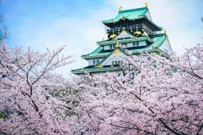 города, замки Японии, замок, Япония, сакура, пагода