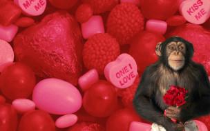 юмор и приколы, розы, сердечки, любовь, цветы, букет, шимпанзе, обезьяна, конфеты