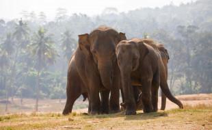 туман, джунгли, пальмы, слоны