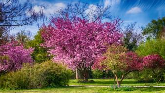 обои для рабочего стола 2048x1152 природа, деревья, дерево, крона