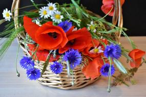 обои для рабочего стола 1920x1281 цветы, разные вместе, васильки, маки, ромашки