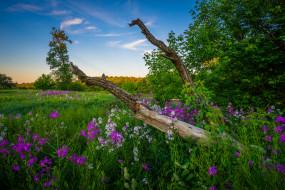 обои для рабочего стола 2048x1367 природа, луга, трава, поле