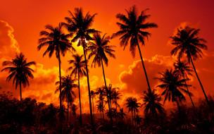 обои для рабочего стола 2880x1800 природа, тропики, кокосовые, пальмы