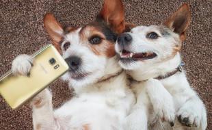 парочка, собаки, селфи, смартфон, настроение, ситуация