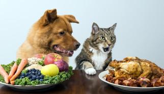 юмор и приколы, кошка, собака, мясо, фрукты