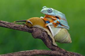 животные, разные вместе, лягушка, улитка