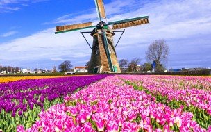 разное, мельницы, мельница, нидерланды, разноцветные, поле, keukenhof, lisse, тюльпаны