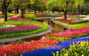 цветы, разные вместе, тюльпаны, синие, мускари, восход, парк, пруд, деревья
