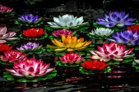 цветы, лилии водяные,  нимфеи,  кувшинки, лилии