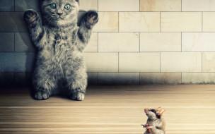 юмор и приколы, мышь, кот, пистолет