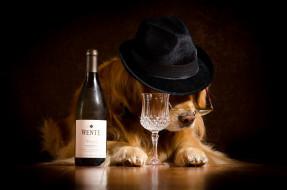 юмор и приколы, собака, очки, шляпа, бутылка, бокал
