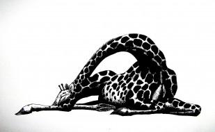 рисованное, животные, графика, жираф, черно-белый