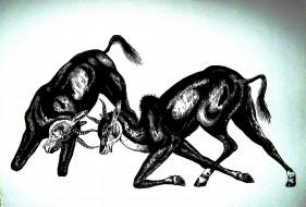 рисованное, животные, газели, графика, антилопы