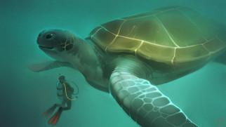 рисованное, животные, черепаха, аквалангист