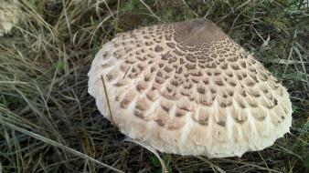 Гриб Зонтик обои для рабочего стола 2048x1152 гриб зонтик, природа, грибы, зонтик, гриб