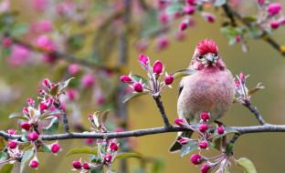 Картинки животные и птицы весной