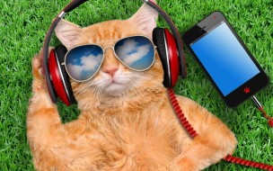 grass, cat, glasses, smart phone