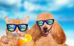 обои для рабочего стола 2880x1800 юмор и приколы, dog, vacation, summer, cat