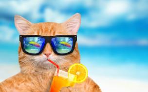 обои для рабочего стола 2880x1800 юмор и приколы, summer, cat