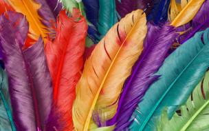 макро, перья, цвет