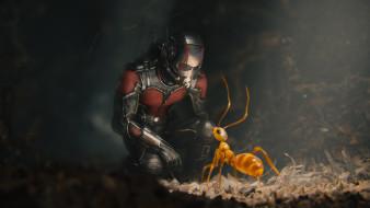 кино фильмы, ant-man, муравей, Человек-муравей, костюм, супергерой, комикс, шлем, марвел