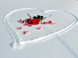 цветы, розы, лепестки, алый, сердце, снег