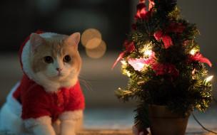животные, коты, новый, год